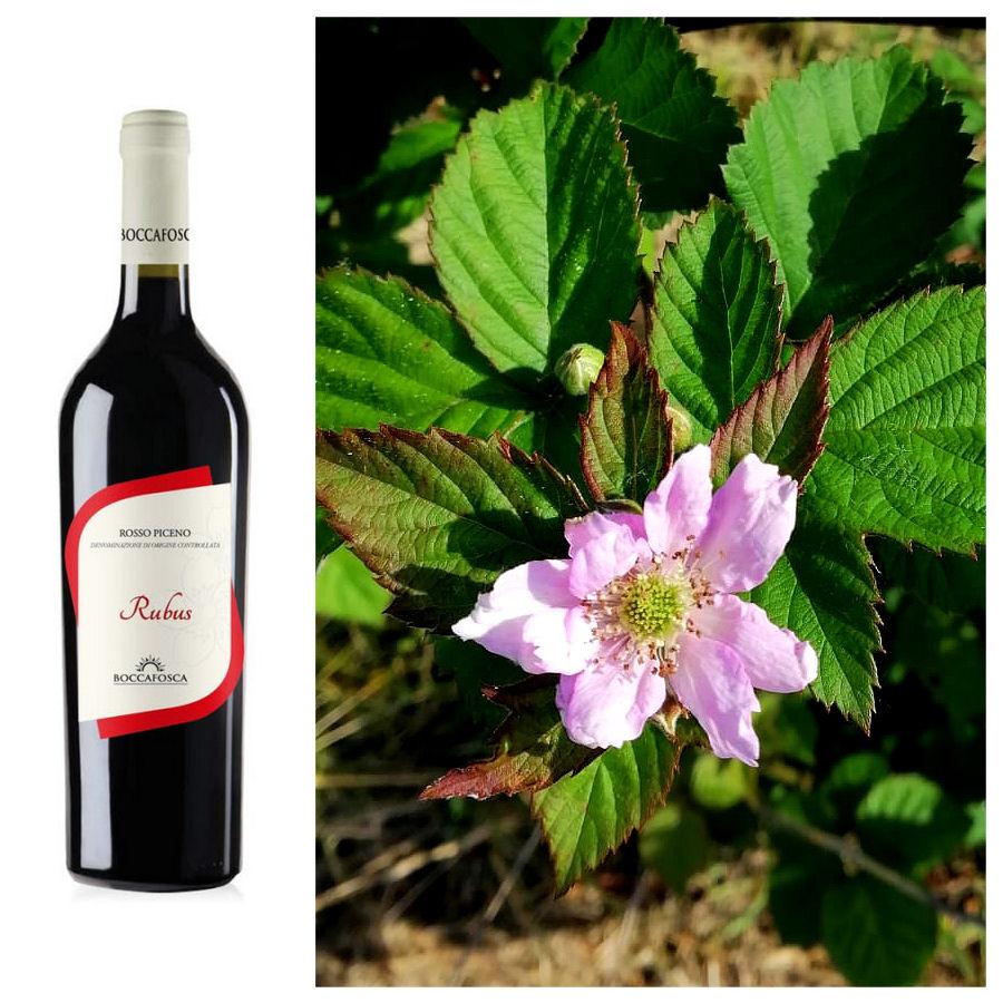 rubus vino rosso piceno